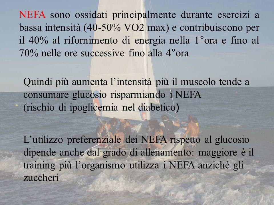 Lutilizzo preferenziale dei NEFA rispetto al glucosio dipende anche dal grado di allenamento: maggiore è il training più lorganismo utilizza i NEFA an