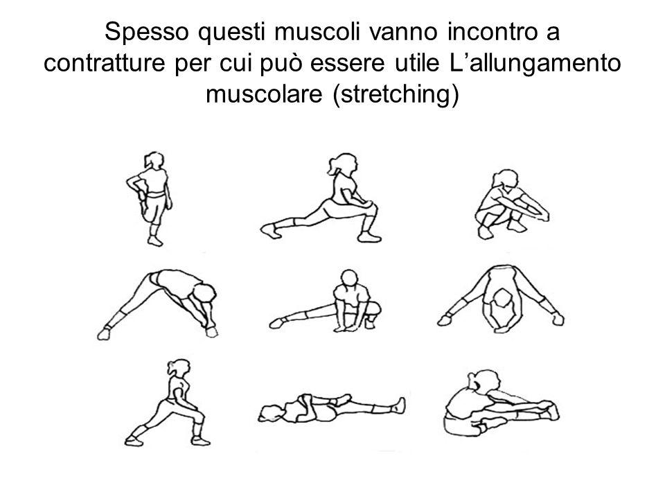 Spesso questi muscoli vanno incontro a contratture per cui può essere utile Lallungamento muscolare (stretching)