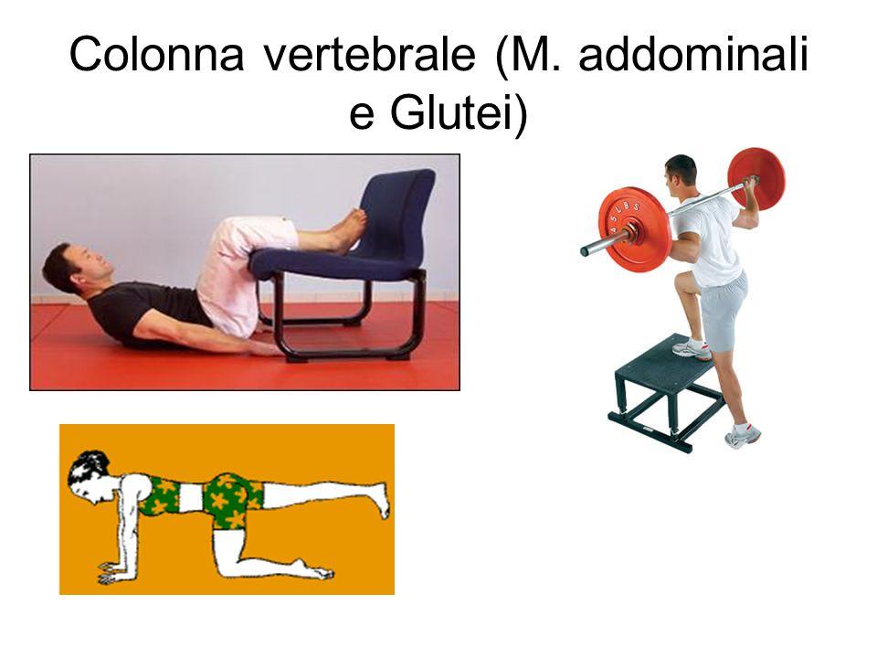 Colonna vertebrale (M. addominali e Glutei)