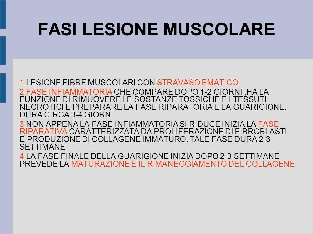 FASI LESIONE MUSCOLARE 1. LESIONE FIBRE MUSCOLARI CON STRAVASO EMATICO 2. FASE INFIAMMATORIA CHE COMPARE DOPO 1-2 GIORNI,HA LA FUNZIONE DI RIMUOVERE L
