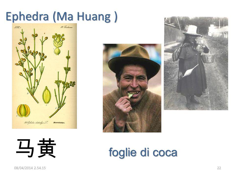 Ephedra (Ma Huang ) foglie di coca 08/04/2014 2.56.0022