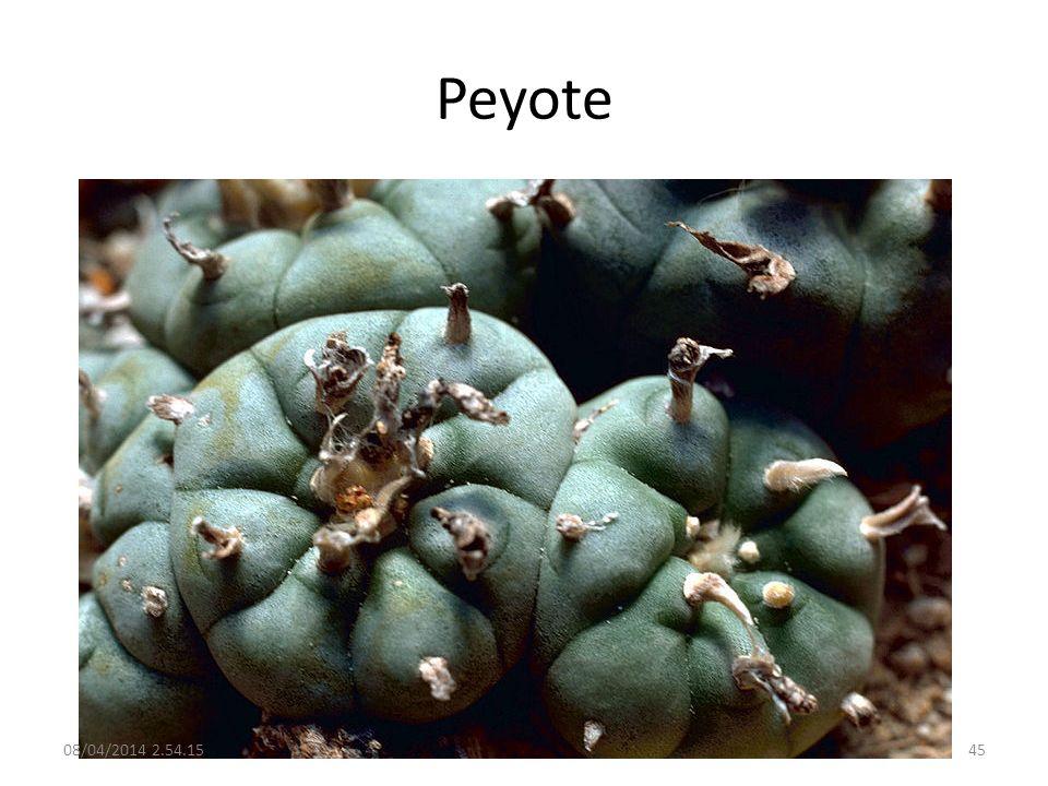 Peyote 08/04/2014 2.56.0045