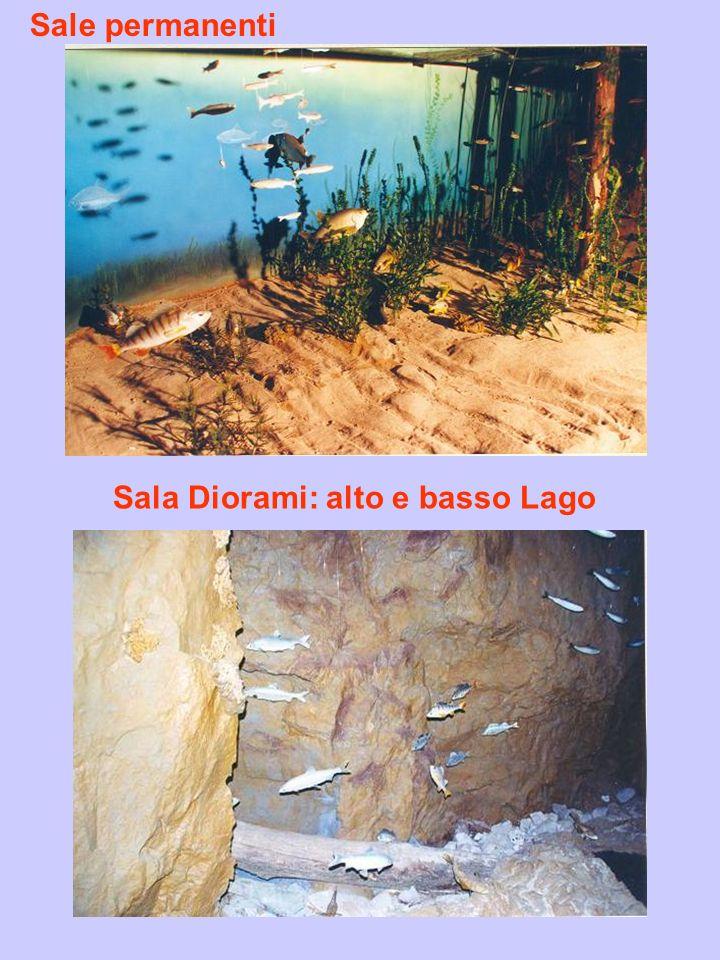 Sala Diorami: alto e basso Lago Sale permanenti