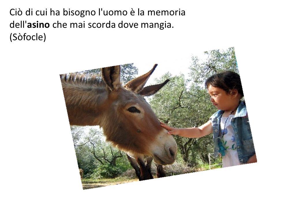 Ciò di cui ha bisogno l uomo è la memoria dell asino che mai scorda dove mangia. (Sòfocle)