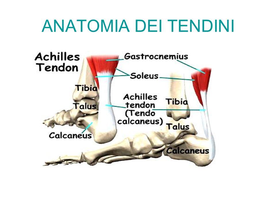 TRAUMI ACUTI DEI TESSUTI MOLLI lesioni tendinee in genere sono prodotte da preesistenti patologie degenerative del tessuto tendineo