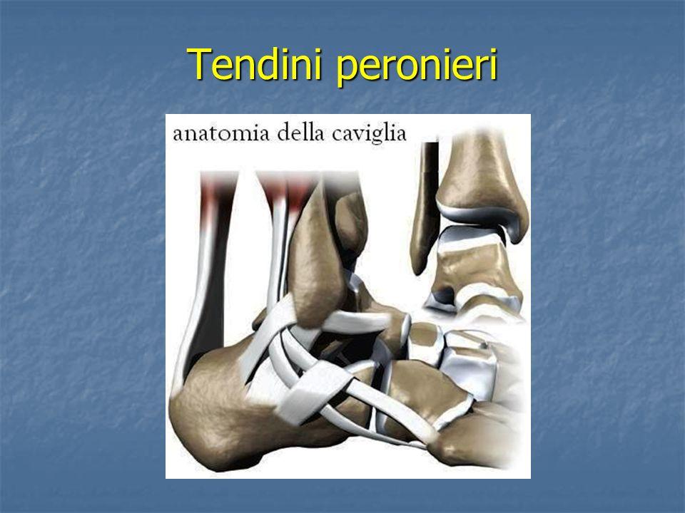 Muscoli peronieri Muscoli peronieri