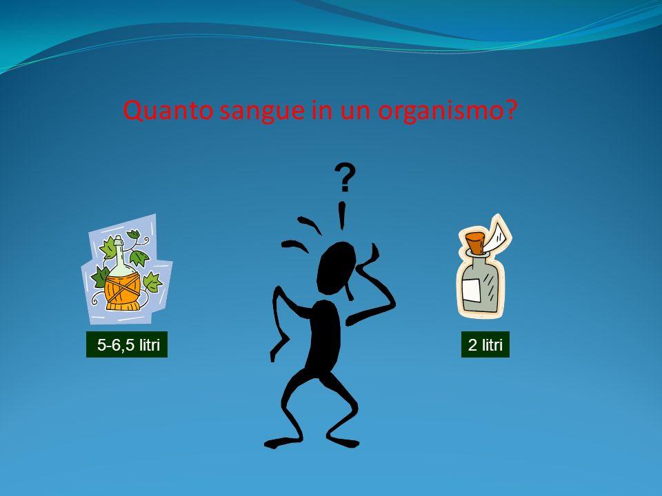 Quanto sangue in un organismo? 5-6,5 litri2 litri ?