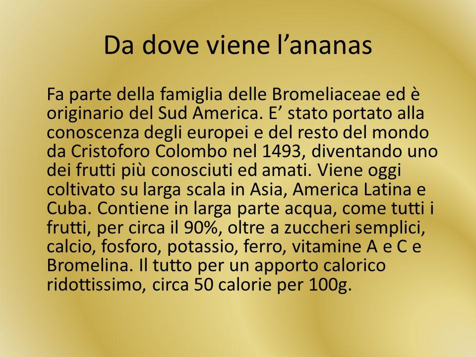 Da dove viene lananas Fa parte della famiglia delle Bromeliaceae ed è originario del Sud America. E stato portato alla conoscenza degli europei e del