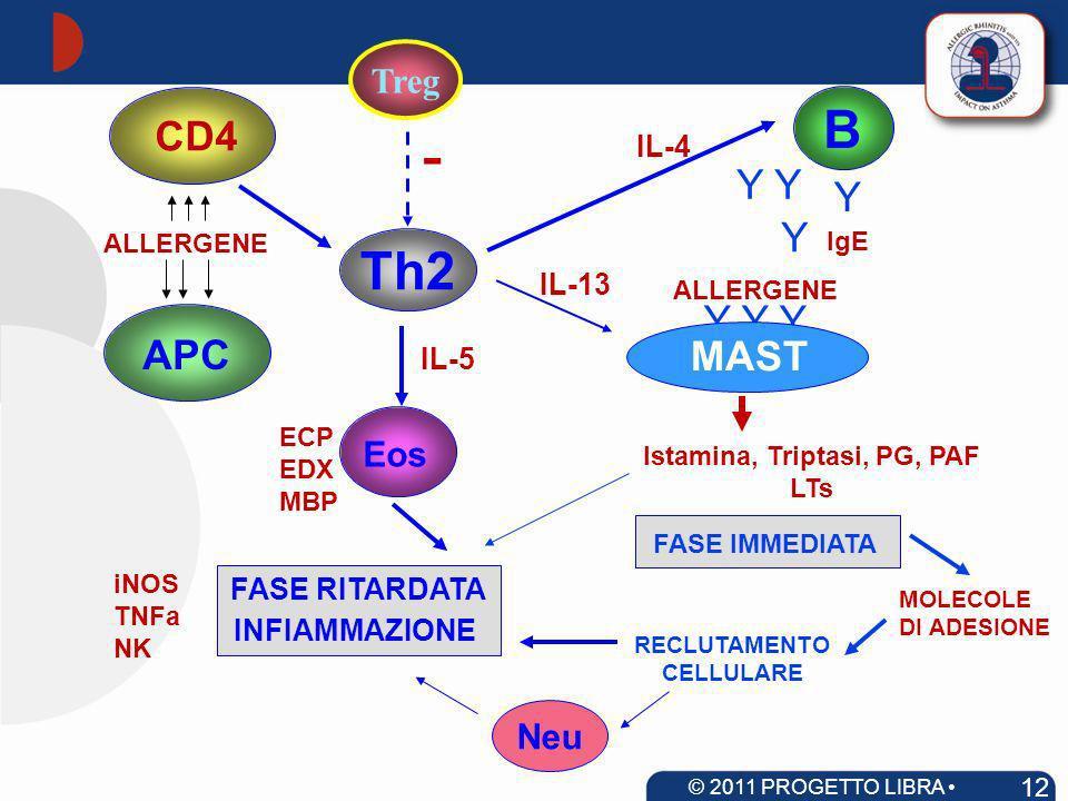 APC ALLERGENE Th2 Eos IL-5 B IL-4 Y Y Y Y Y IgE MAST IL-13 ECP EDX MBP CD4 FASE IMMEDIATA Istamina, Triptasi, PG, PAF LTs MOLECOLE DI ADESIONE ALLERGE