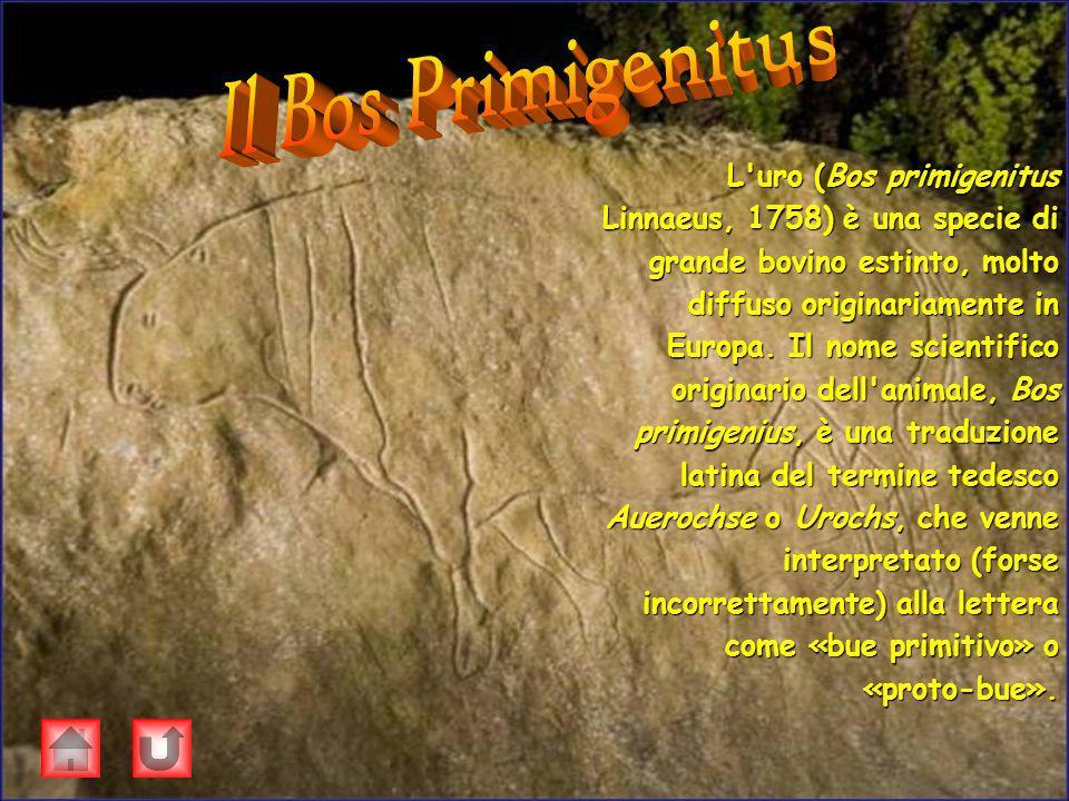 L'uro (Bos primigenitus Linnaeus, 1758) è una specie di grande bovino estinto, molto diffuso originariamente in Europa. Il nome scientifico originario