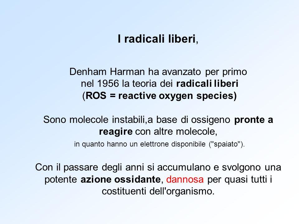 I radicali liberi, Denham Harman ha avanzato per primo nel 1956 la teoria dei radicali liberi (ROS = reactive oxygen species) Sono molecole instabili,