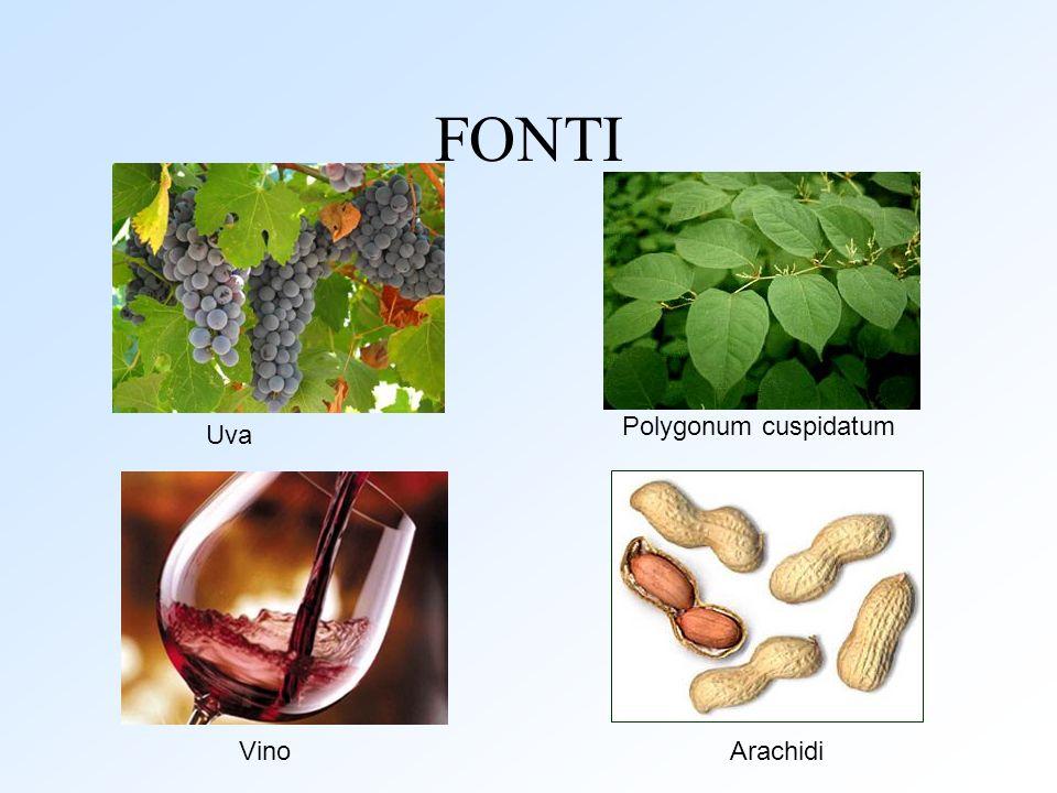 FONTI Uva Polygonum cuspidatum ArachidiVino
