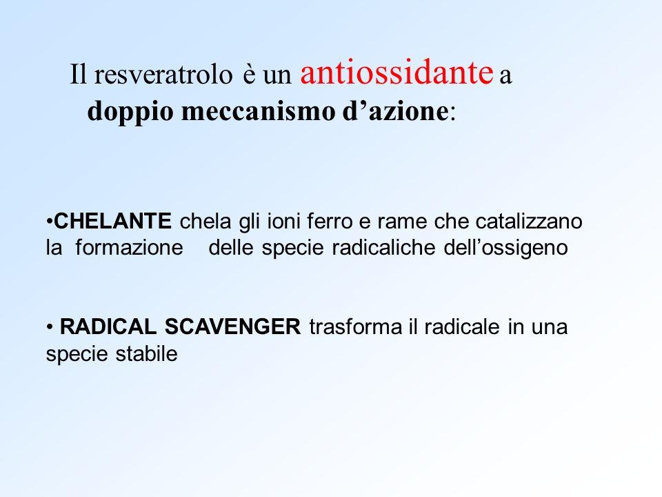 Il resveratrolo è un antiossidante a doppio meccanismo dazione: CHELANTE chela gli ioni ferro e rame che catalizzano la formazione delle specie radica
