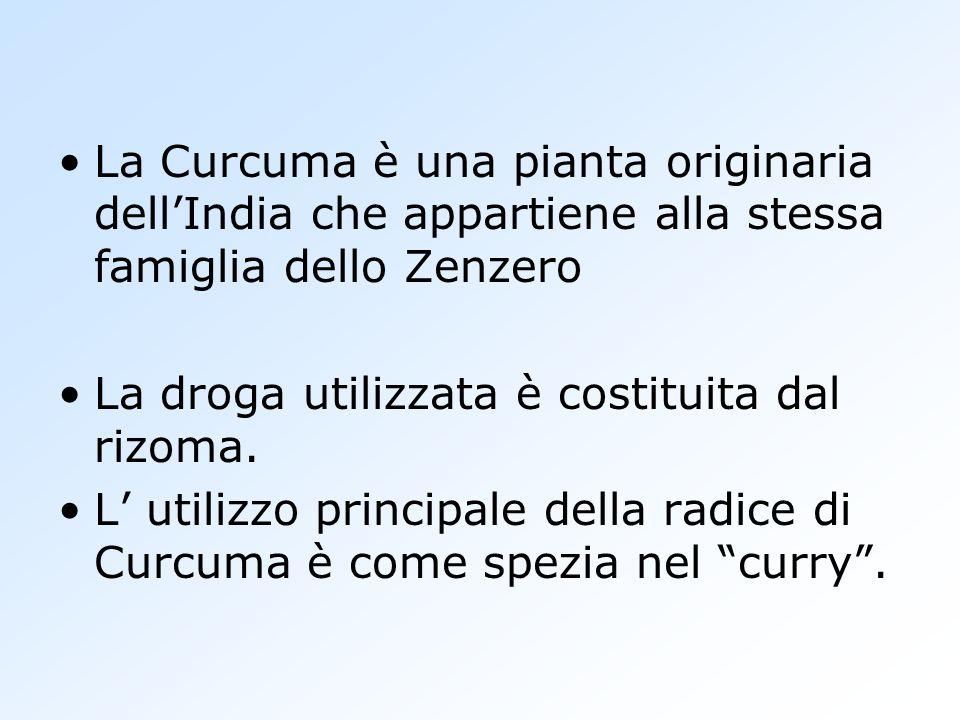 La Curcuma è una pianta originaria dellIndia che appartiene alla stessa famiglia dello Zenzero La droga utilizzata è costituita dal rizoma. L utilizzo