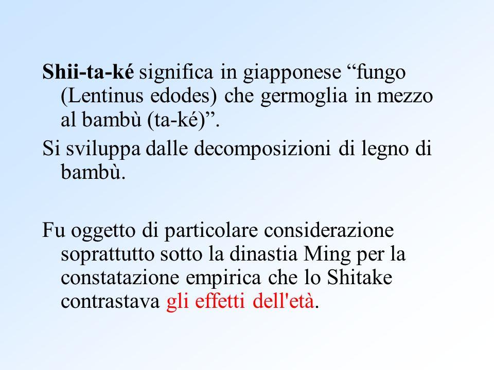 Shii-ta-ké significa in giapponese fungo (Lentinus edodes) che germoglia in mezzo al bambù (ta-ké). Si sviluppa dalle decomposizioni di legno di bambù