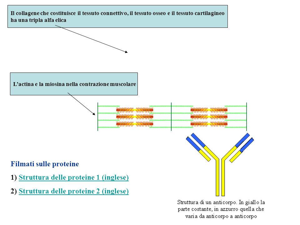 Filmati sulle proteine 1) Struttura delle proteine 1 (inglese)Struttura delle proteine 1 (inglese) 2) Struttura delle proteine 2 (inglese)Struttura de