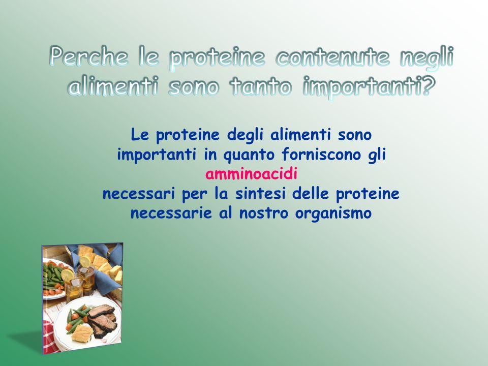 Le proteine degli alimenti sono importanti in quanto forniscono gli amminoacidi necessari per la sintesi delle proteine necessarie al nostro organismo