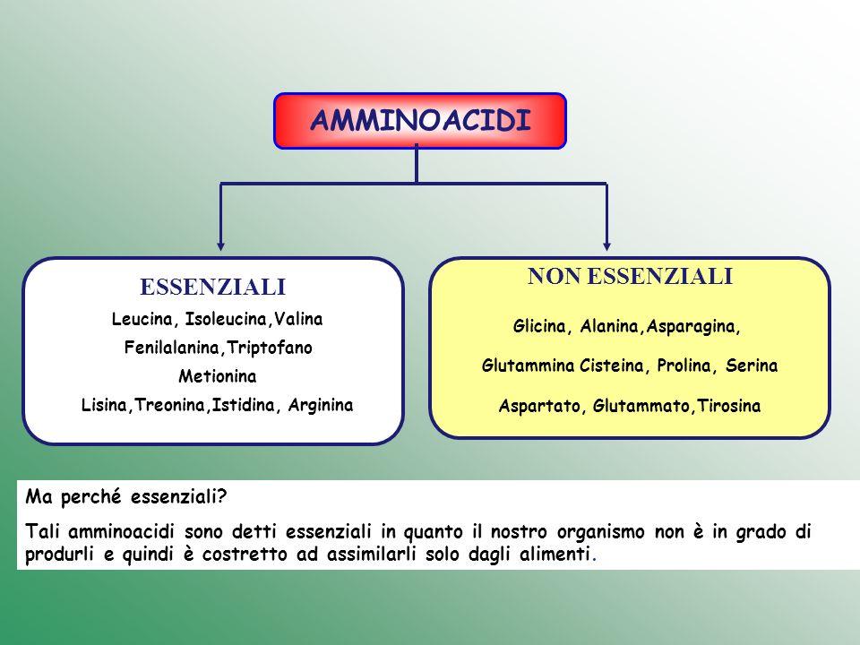 AMMINOACIDI ESSENZIALI NON ESSENZIALI Glicina, Alanina,Asparagina, Glutammina Cisteina, Prolina, Serina Aspartato, Glutammato,Tirosina Leucina, Isoleu