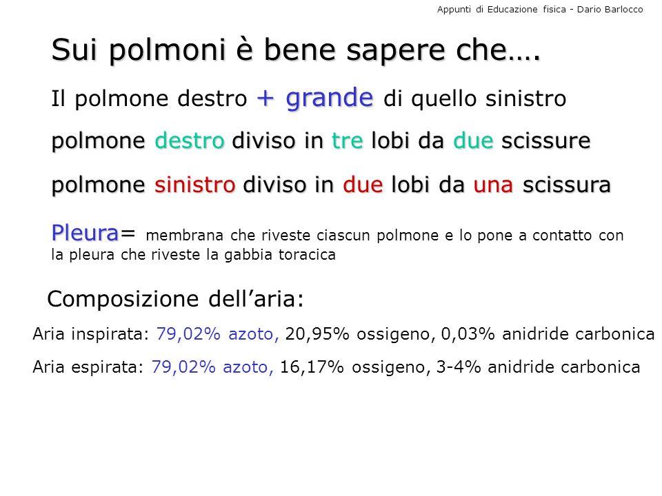 Appunti di Educazione fisica - Dario Barlocco Sui polmoni è bene sapere che…. + grande Il polmone destro + grande di quello sinistro Composizione dell
