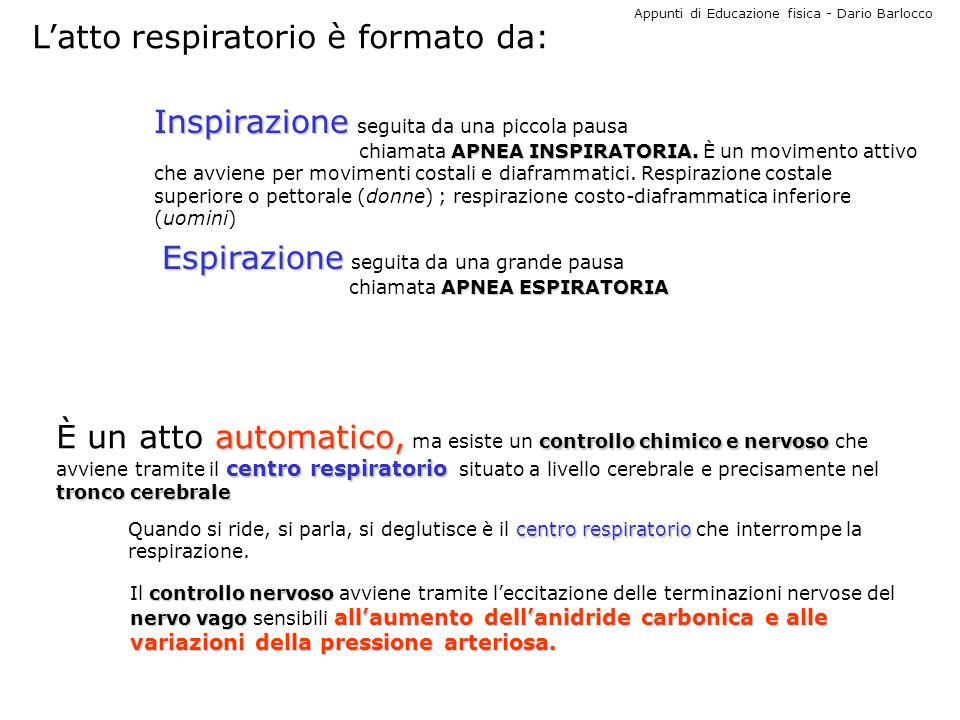 Appunti di Educazione fisica - Dario Barlocco Latto respiratorio è formato da: Inspirazione Inspirazione seguita da una piccola pausa APNEA INSPIRATOR