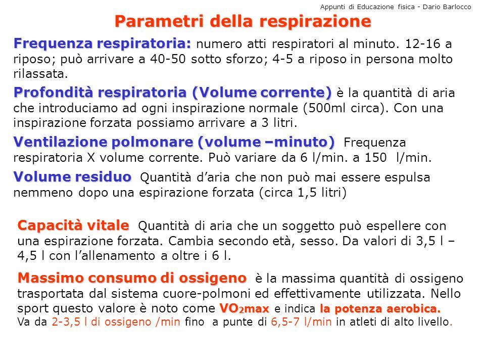 Appunti di Educazione fisica - Dario Barlocco Parametri della respirazione Frequenza respiratoria: Frequenza respiratoria: numero atti respiratori al