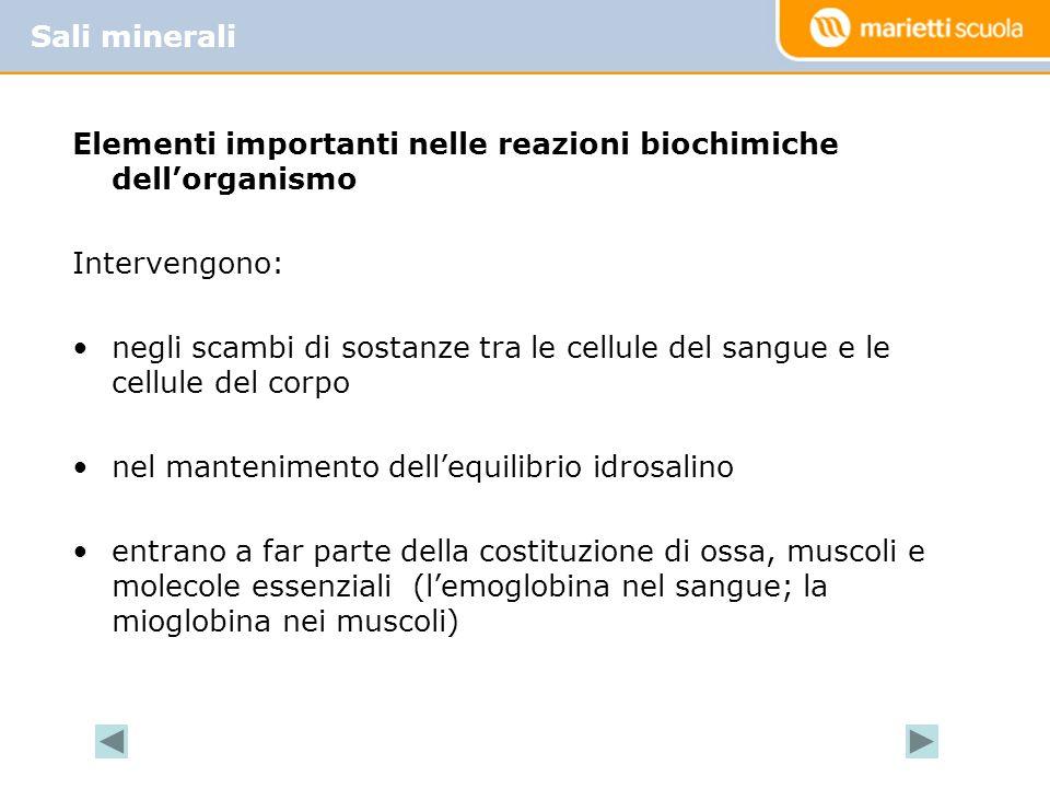 Elementi importanti nelle reazioni biochimiche dellorganismo Intervengono: negli scambi di sostanze tra le cellule del sangue e le cellule del corpo n