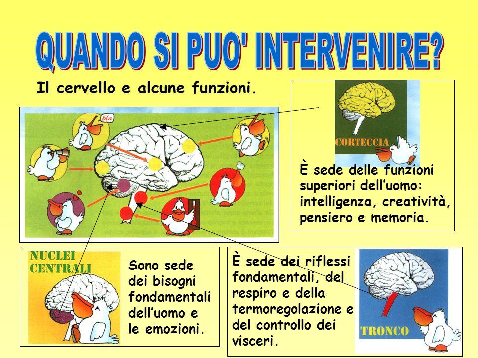 Il cervello e alcune funzioni. È sede delle funzioni superiori delluomo: intelligenza, creatività, pensiero e memoria. Sono sede dei bisogni fondament