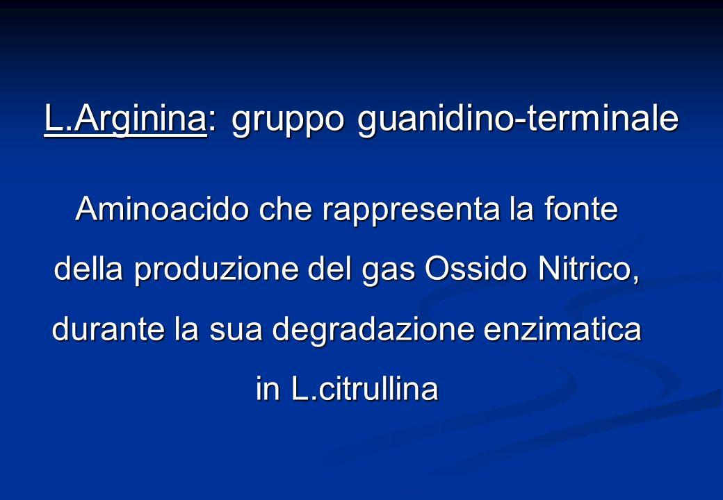 Aminoacido che rappresenta la fonte della produzione del gas Ossido Nitrico, durante la sua degradazione enzimatica in L.citrullina L.Arginina: gruppo guanidino-terminale