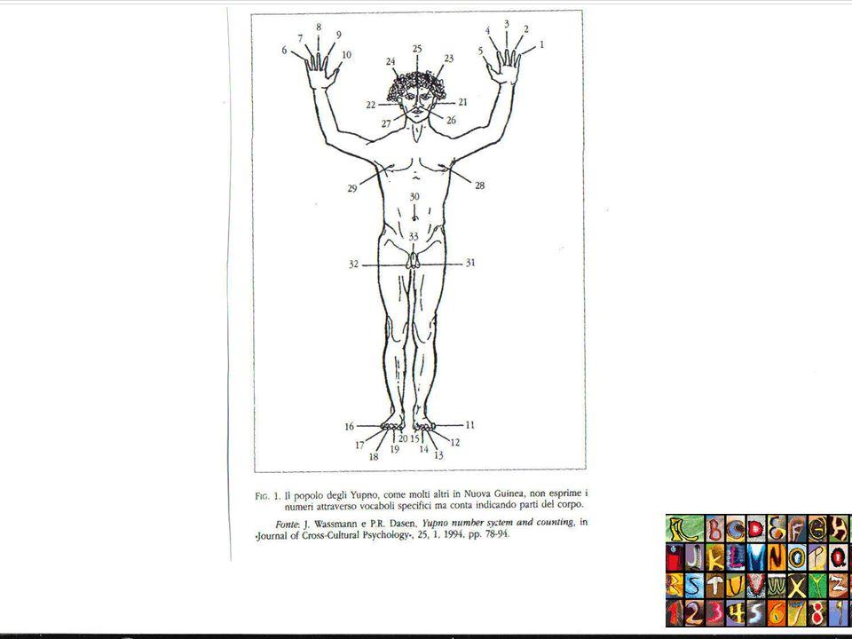Il linguaggio dei numeri: indicare piccole quantità Luso del corpo umano: mani, piedi (i Kilenge:5=mano; 10= due mani;15=due mai e un piede; 20=un uomo) Sistemi molto elaborati di conteggio mantenendo un ordine fisso implicano che ogni termine della sequenza rappresenta una certa numerosità che è maggiore di quella che precede e minore di quella che segue Gli Yupno della Nuova Guinea Uno, due, tre (très, through, troppo)