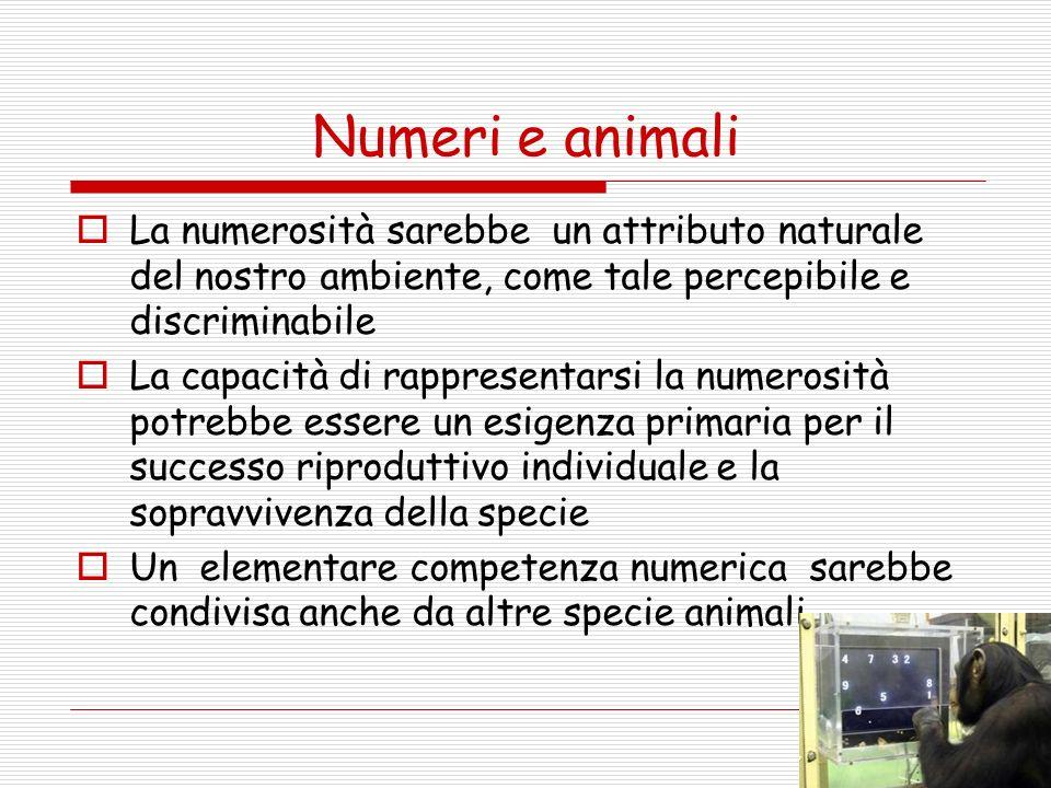 Capacità matematiche degli animali Riconoscere quantità Comparare quantità (anche tra stimoli sensoriali diversi) Eseguire operazioni entro il tre Ordinare numerosità diverse