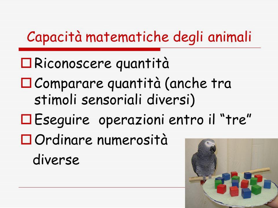 Capacità matematiche degli animali Riconoscere quantità Comparare quantità (anche tra stimoli sensoriali diversi) Eseguire operazioni entro il tre Ord