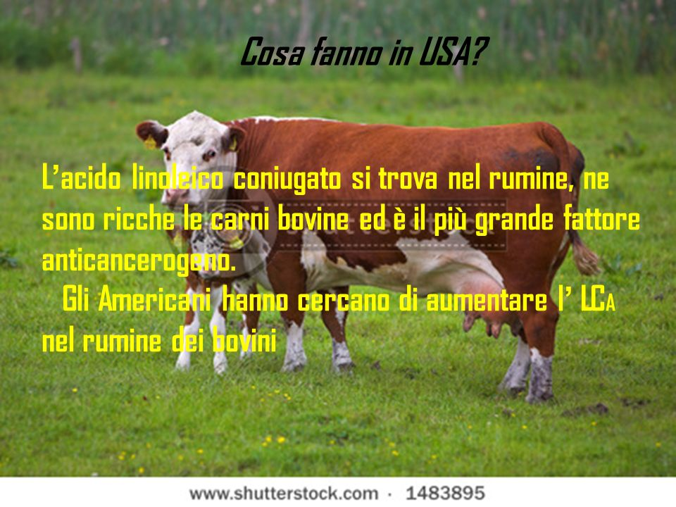L acido linoleico coniugato si trova nel rumine, ne sono ricche le carni bovine ed è il più grande fattore anticancerogeno.