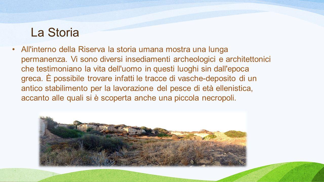 La Storia All'interno della Riserva la storia umana mostra una lunga permanenza. Vi sono diversi insediamenti archeologici e architettonici che testim