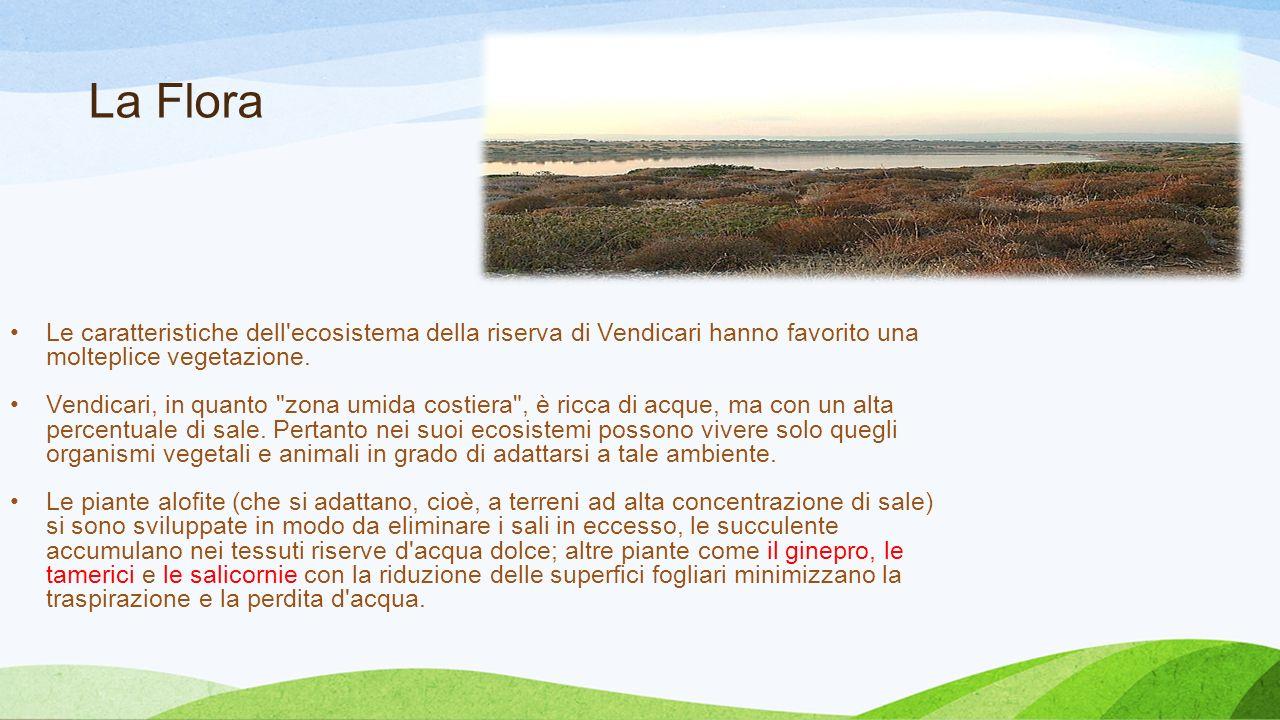 La Flora Le caratteristiche dell'ecosistema della riserva di Vendicari hanno favorito una molteplice vegetazione. Vendicari, in quanto