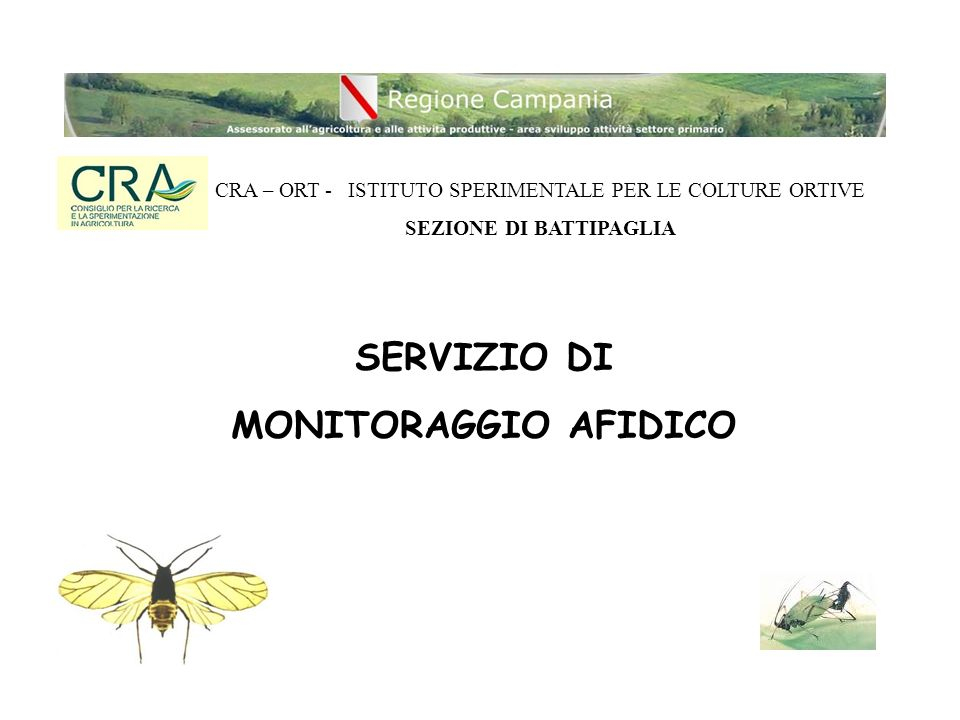 RETE DI MONITORAGGIO AFIDICO IN CAMPANIA - Piana del Sele (Battipaglia – SA) - Agro Acerrano-nolano (Acerra – NA)