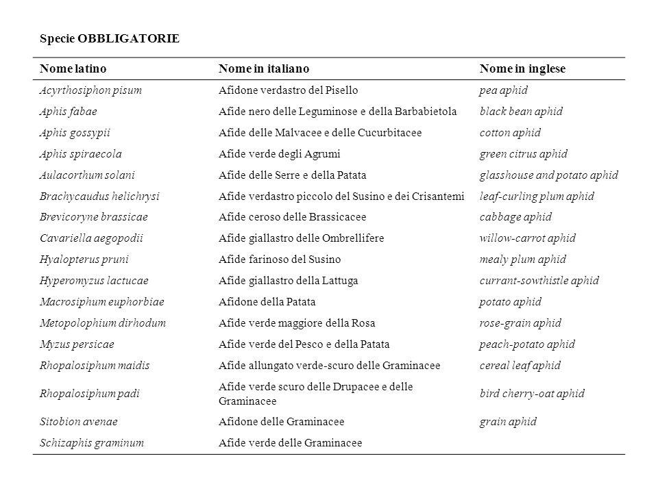 Specie OBBLIGATORIE Nome latinoNome in italianoNome in inglese Acyrthosiphon pisumAfidone verdastro del Pisellopea aphid Aphis fabaeAfide nero delle Leguminose e della Barbabietolablack bean aphid Aphis gossypiiAfide delle Malvacee e delle Cucurbitaceecotton aphid Aphis spiraecolaAfide verde degli Agrumigreen citrus aphid Aulacorthum solaniAfide delle Serre e della Patataglasshouse and potato aphid Brachycaudus helichrysiAfide verdastro piccolo del Susino e dei Crisantemileaf-curling plum aphid Brevicoryne brassicaeAfide ceroso delle Brassicaceecabbage aphid Cavariella aegopodiiAfide giallastro delle Ombrelliferewillow-carrot aphid Hyalopterus pruniAfide farinoso del Susinomealy plum aphid Hyperomyzus lactucaeAfide giallastro della Lattugacurrant-sowthistle aphid Macrosiphum euphorbiaeAfidone della Patatapotato aphid Metopolophium dirhodumAfide verde maggiore della Rosarose-grain aphid Myzus persicaeAfide verde del Pesco e della Patatapeach-potato aphid Rhopalosiphum maidisAfide allungato verde-scuro delle Graminaceecereal leaf aphid Rhopalosiphum padi Afide verde scuro delle Drupacee e delle Graminacee bird cherry-oat aphid Sitobion avenaeAfidone delle Graminaceegrain aphid Schizaphis graminumAfide verde delle Graminacee