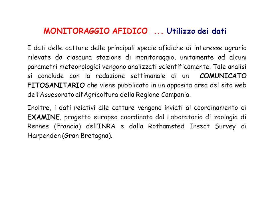 MONITORAGGIO AFIDICO... Utilizzo dei dati I dati delle catture delle principali specie afidiche di interesse agrario rilevate da ciascuna stazione di