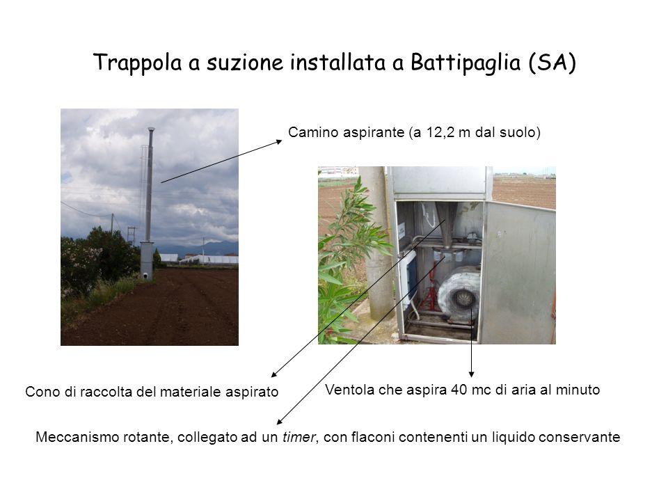 Trappola a suzione installata a Battipaglia (SA) Camino aspirante (a 12,2 m dal suolo) Ventola che aspira 40 mc di aria al minuto Cono di raccolta del