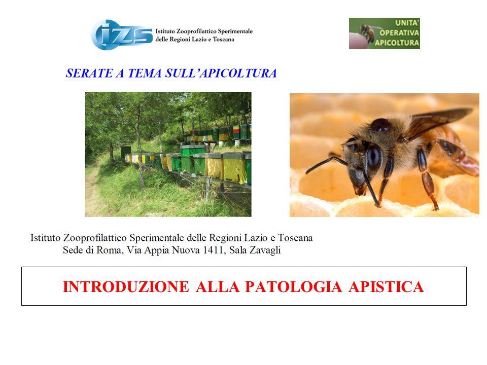 Acariosi (Acarapis woodi) Malattia denunciabile Ultimo focolaio: negli anni 90, in Sicilia.