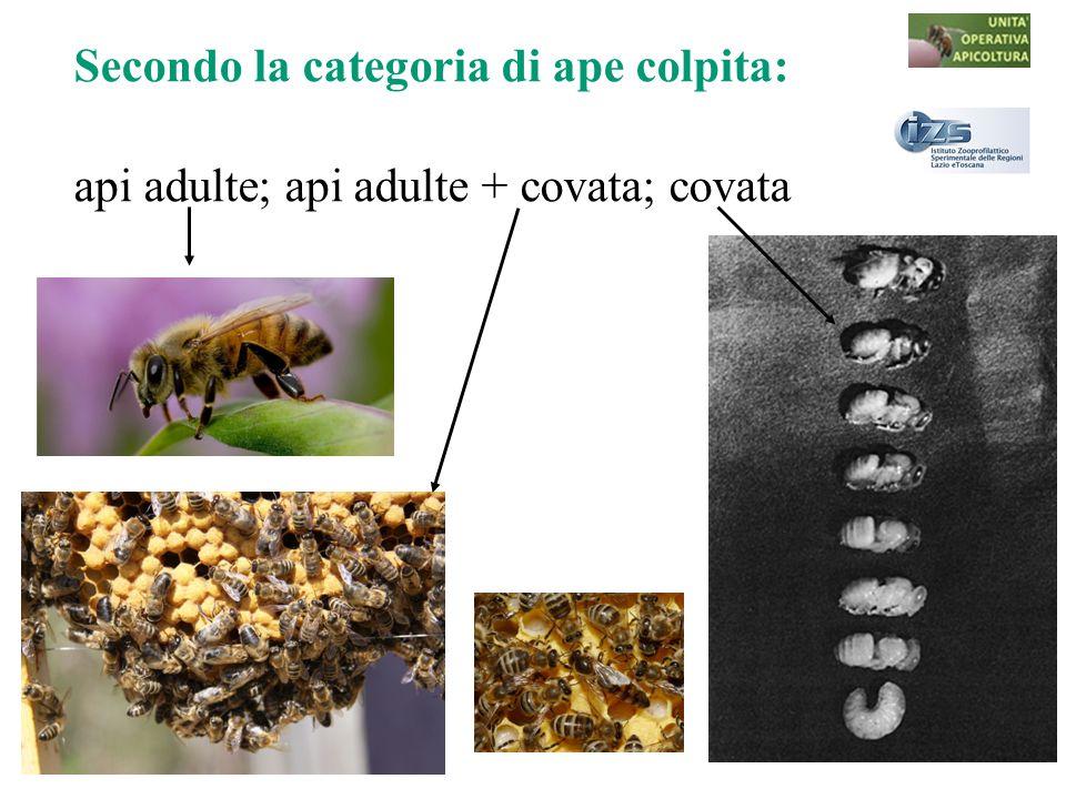Secondo la categoria di ape colpita: api adulte; api adulte + covata; covata