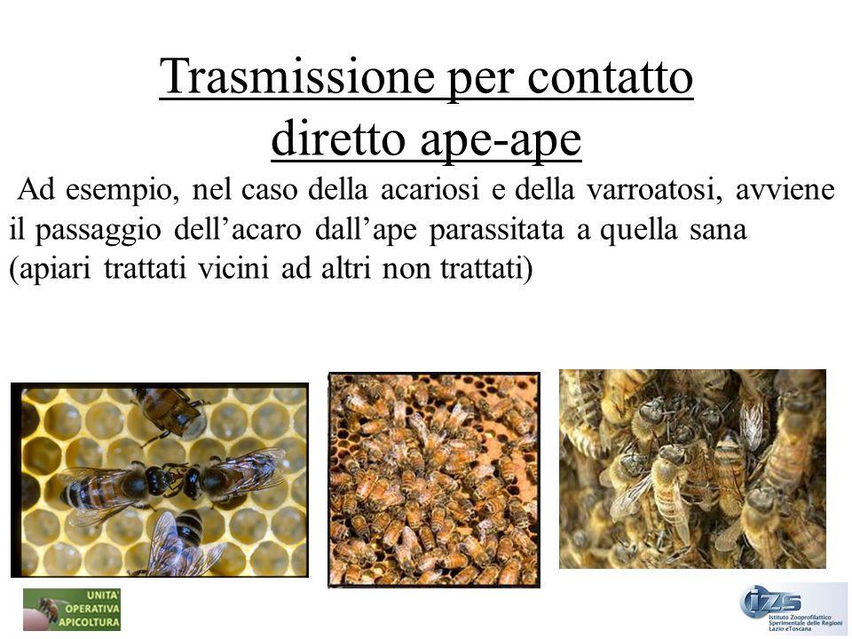 Trasmissione per contatto diretto ape-ape Ad esempio, nel caso della acariosi e della varroatosi, avviene il passaggio dellacaro dallape parassitata a
