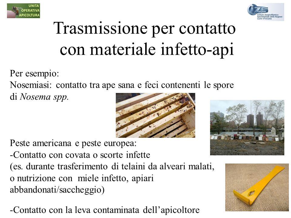 Trasmissione per contatto con materiale infetto-api Per esempio: Nosemiasi: contatto tra ape sana e feci contenenti le spore di Nosema spp. Peste amer