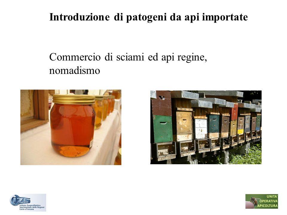 Introduzione di patogeni da api importate Commercio di sciami ed api regine, nomadismo
