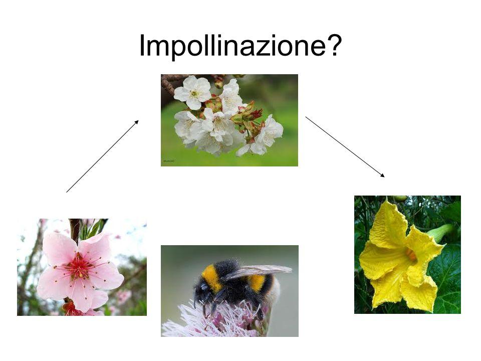 Impollinazione?