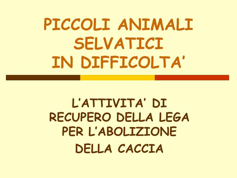 PICCOLI ANIMALI SELVATICI IN DIFFICOLTA LATTIVITA DI RECUPERO DELLA LEGA PER LABOLIZIONE DELLA CACCIA