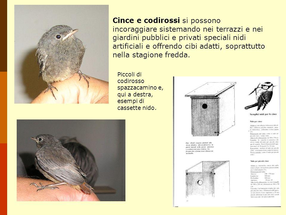 Cince e codirossi si possono incoraggiare sistemando nei terrazzi e nei giardini pubblici e privati speciali nidi artificiali e offrendo cibi adatti,