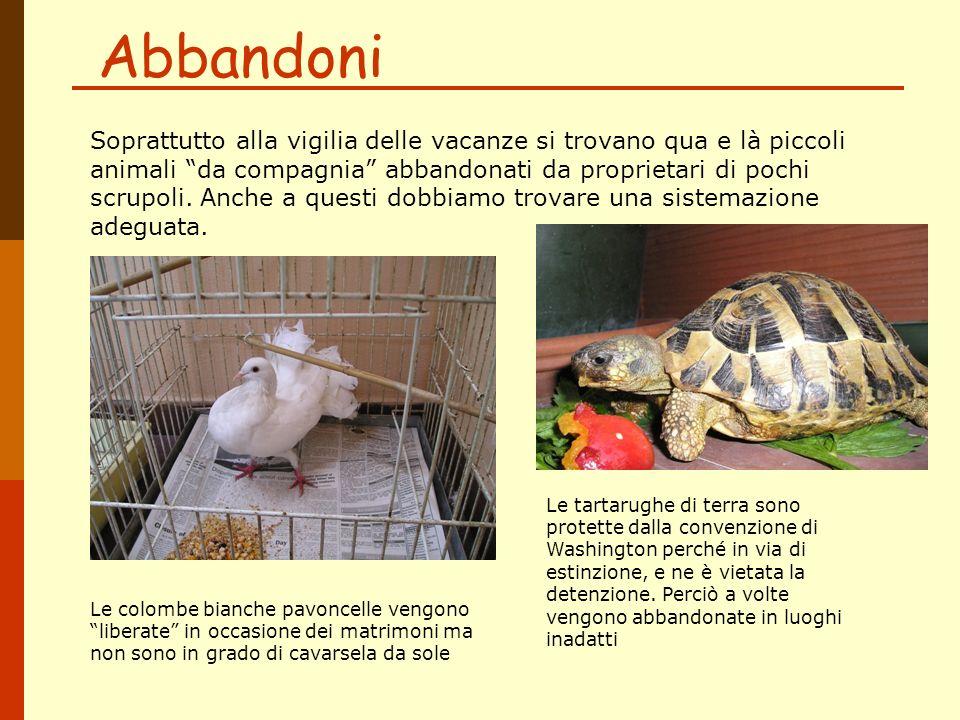 Abbandoni Soprattutto alla vigilia delle vacanze si trovano qua e là piccoli animali da compagnia abbandonati da proprietari di pochi scrupoli. Anche