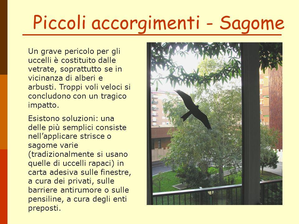Piccoli accorgimenti - Sagome Un grave pericolo per gli uccelli è costituito dalle vetrate, soprattutto se in vicinanza di alberi e arbusti. Troppi vo