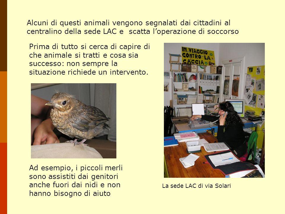 Gatti e auto Nel nostro paese, la nidificazione degli uccelli è concentrata nella tarda primavera-inizio estate.