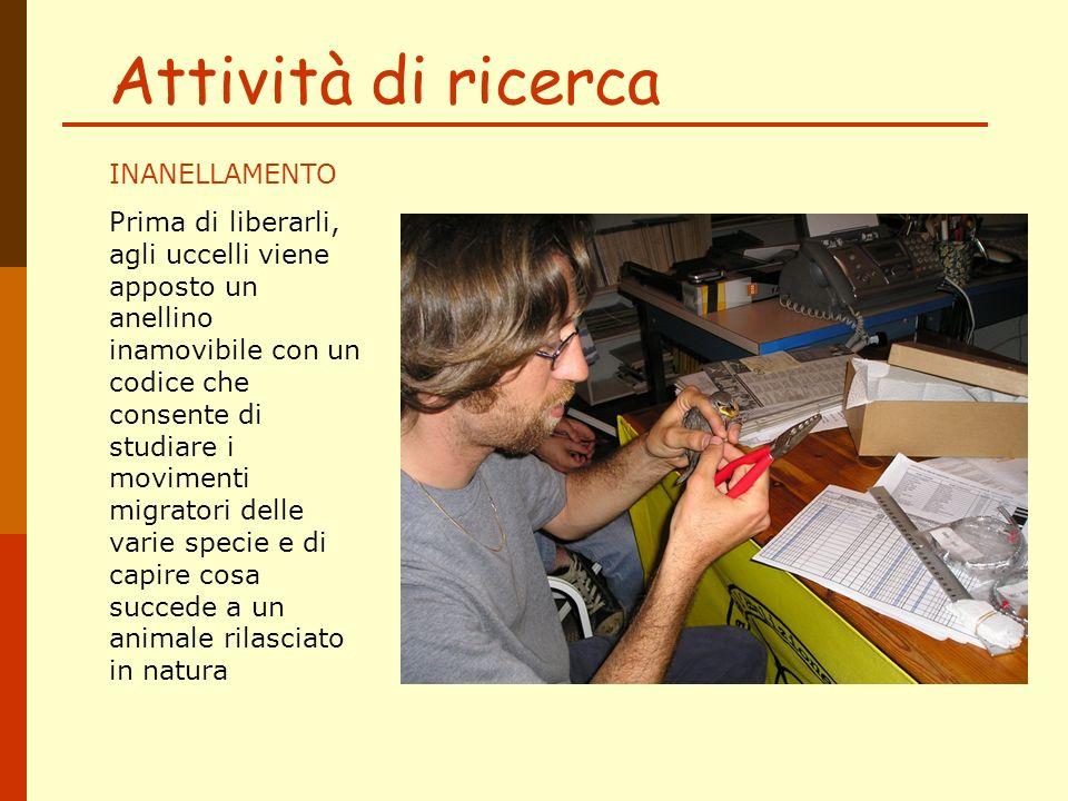Le specie più frequenti a Milano Il verdone e il fringuello sono uccelli granivori che vivono nei parchi e nelle zone verdi, anche piccole.